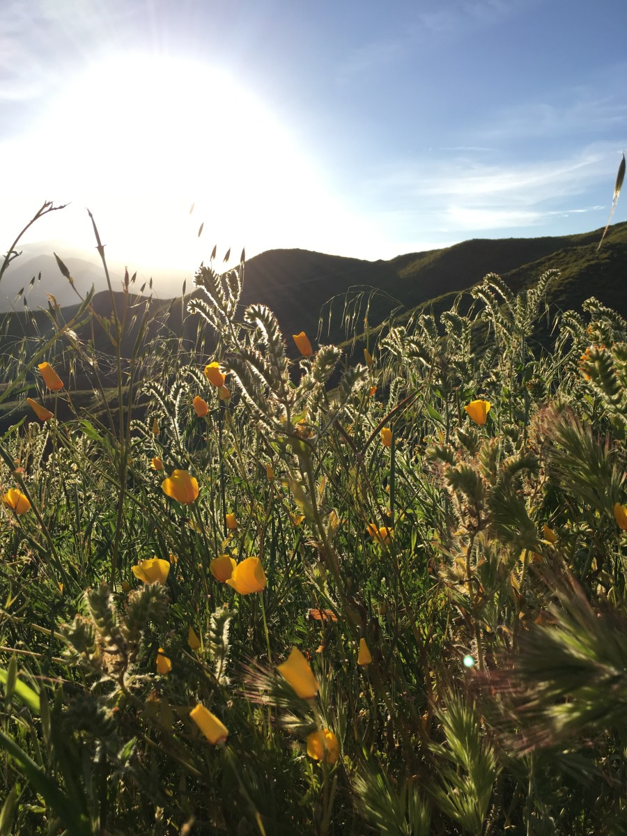 "{The last of the ""super bloom""}"