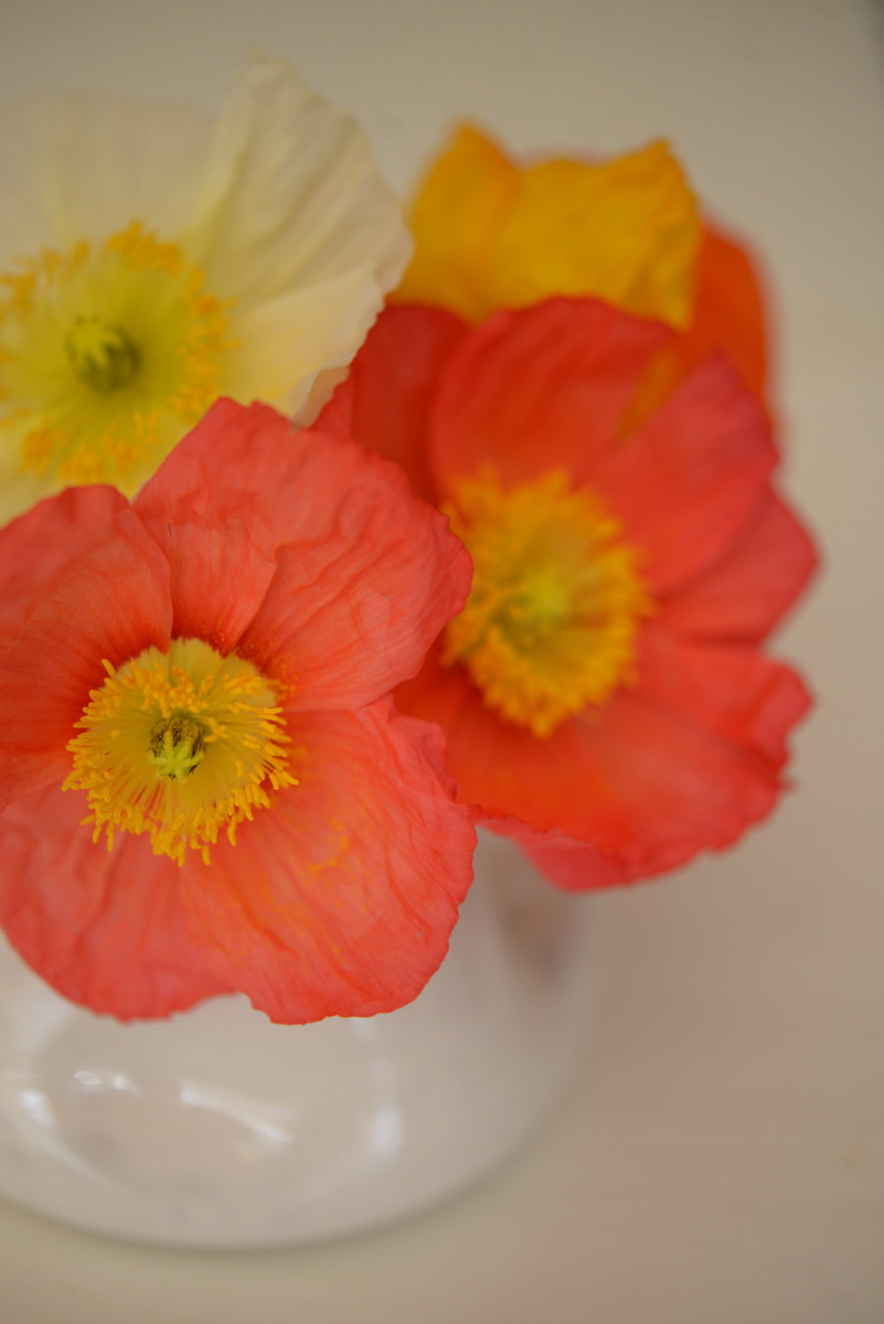 {Crepe-like flowers brighten up the dining room}