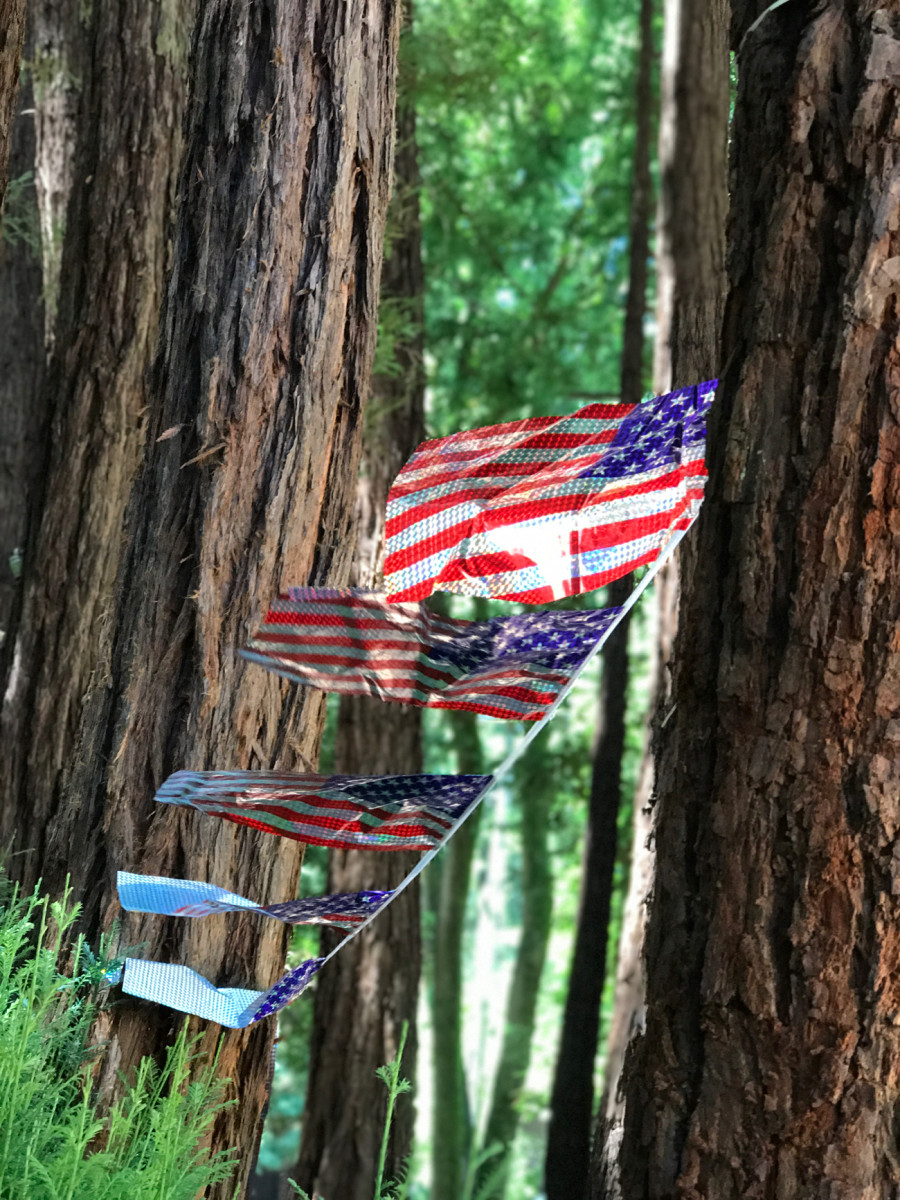 {A sweet little Independence Day picnic in the redwoods}