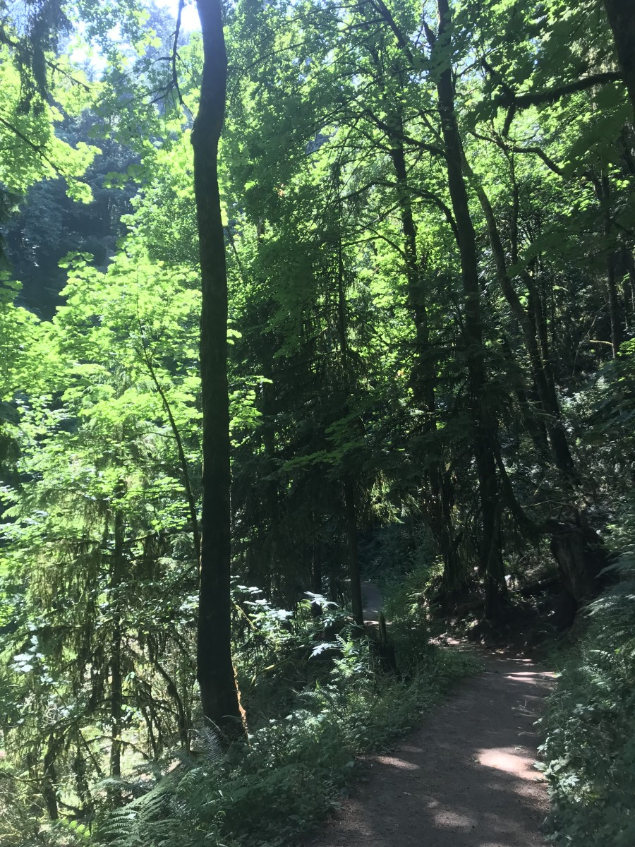 Hike by Pittock Mansion