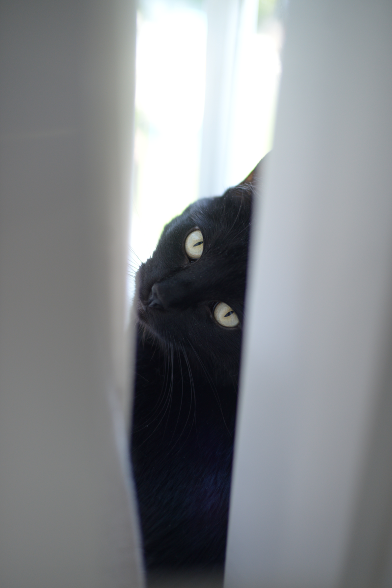 {Luna, feeling herself in the window}
