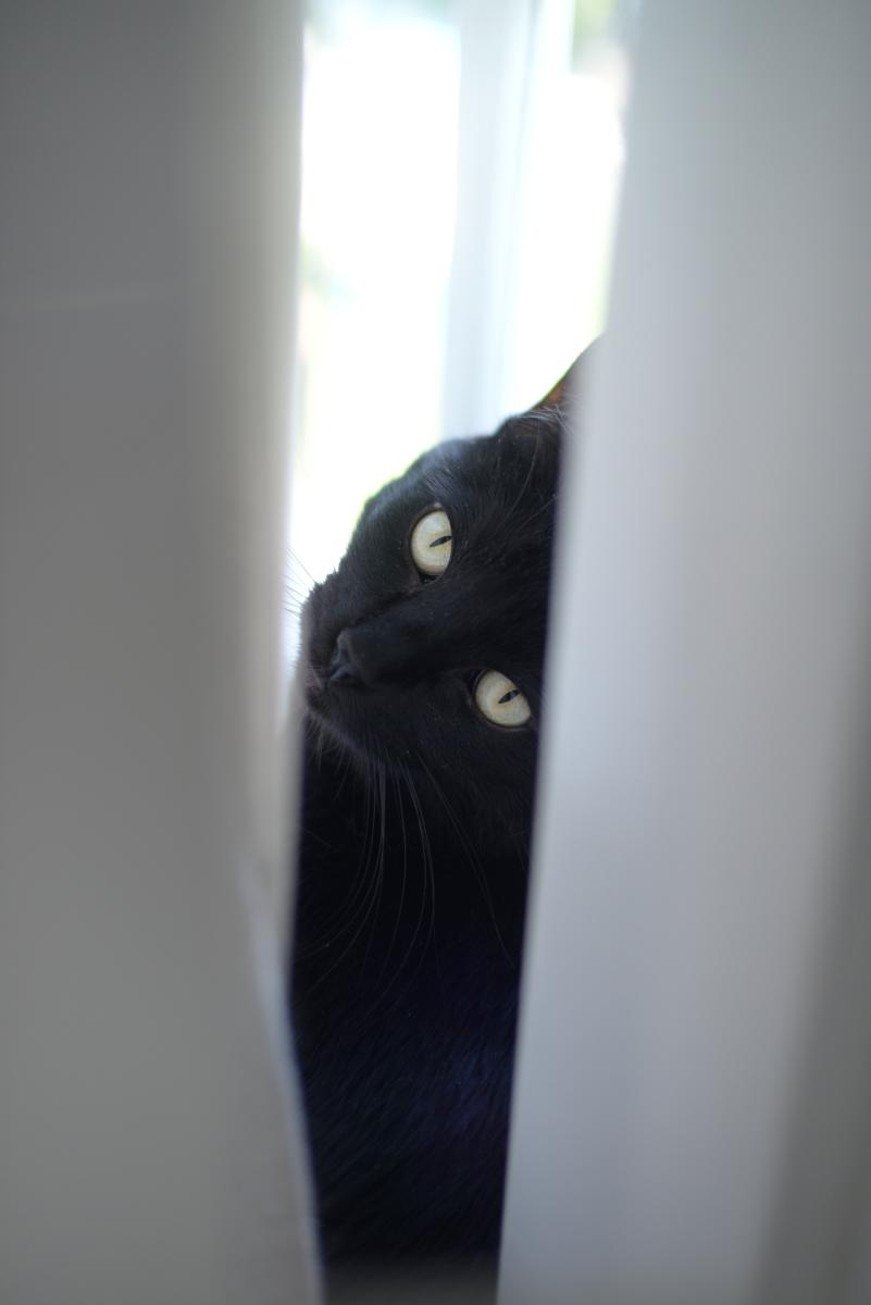 {Luna, feeling herself in the window}