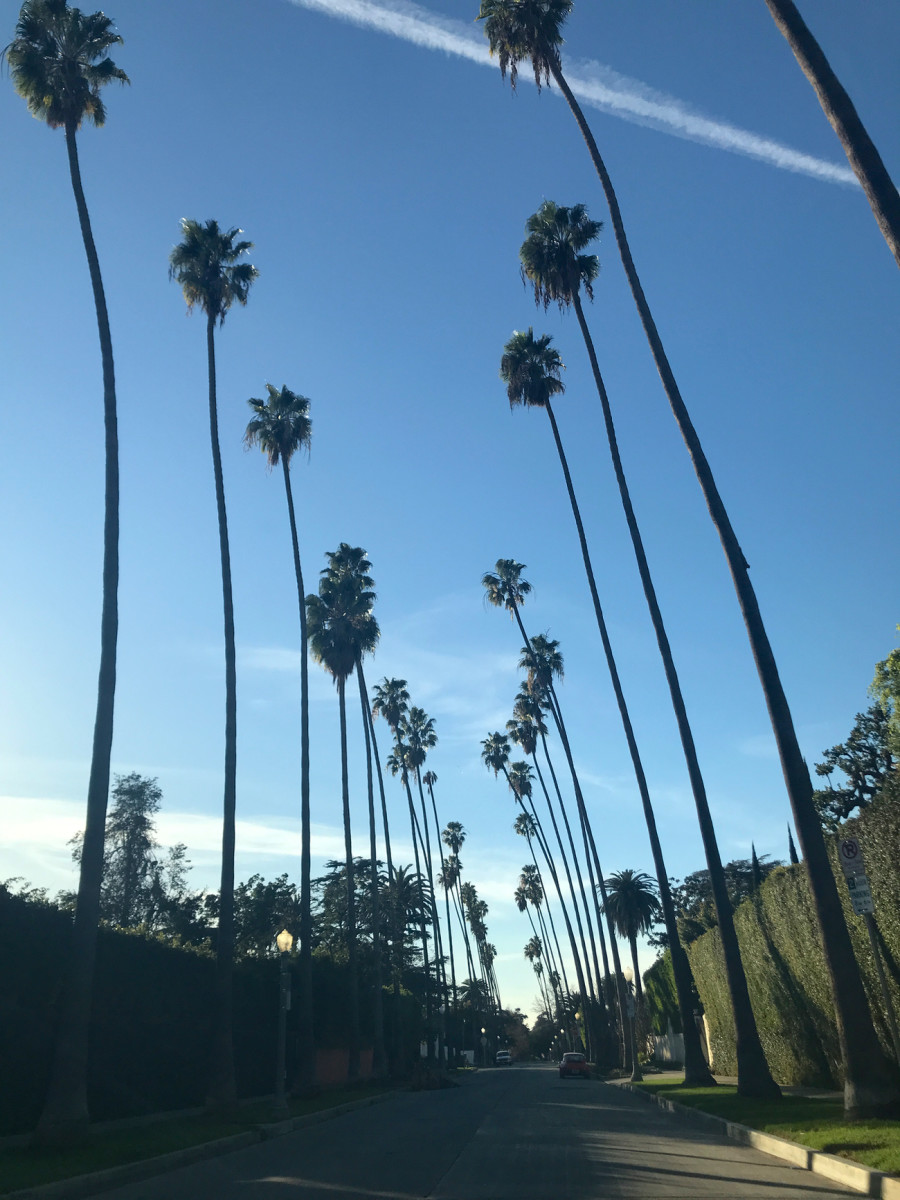 {Leaning palm trees}