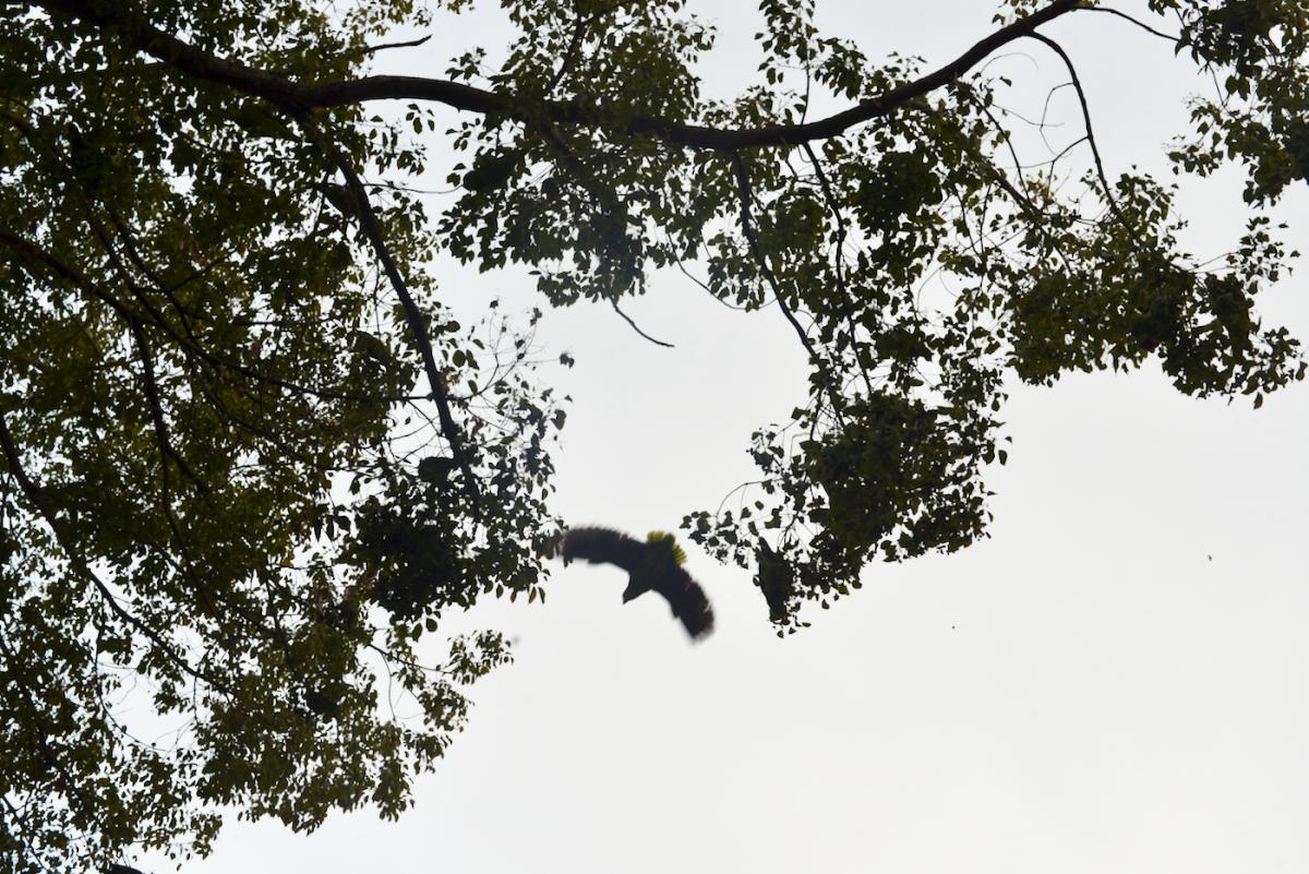 {Wild parrots at dusk}