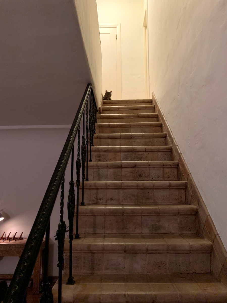 Meesh's new favorite spot in the apartment: The top of the stairs