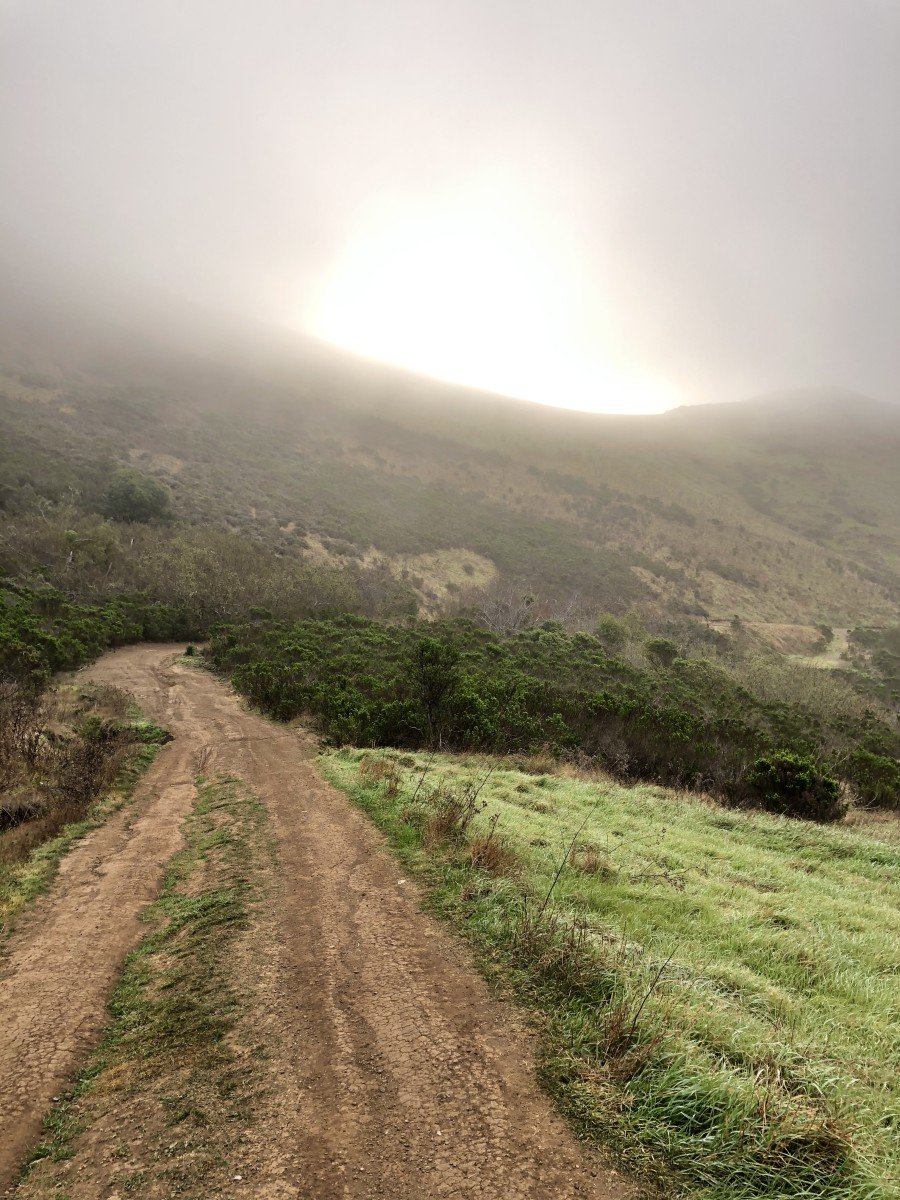 A foggy morning on my Morro Bay hike on Sunday!