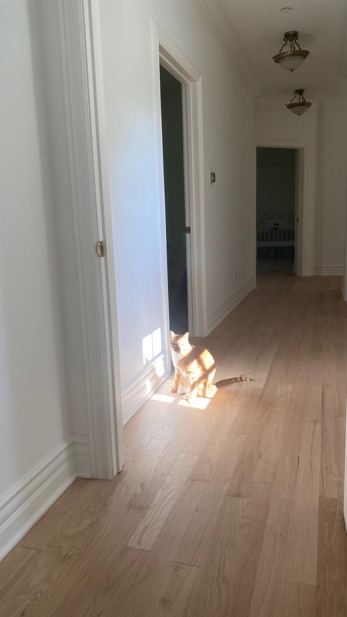 Rocco trouvant sa lumière.