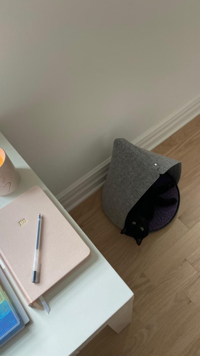 Luna me regarde depuis son nouveau coin préféré dans notre chambre d'amis transformée en bureau.